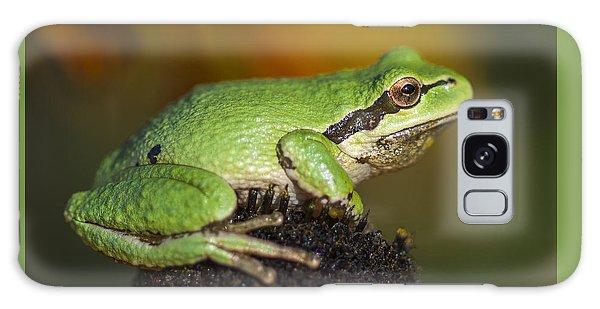 Treefrog On Rudbeckia Galaxy Case