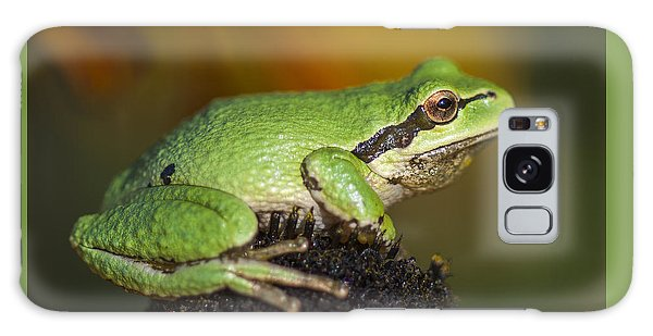 Treefrog On Rudbeckia Galaxy Case