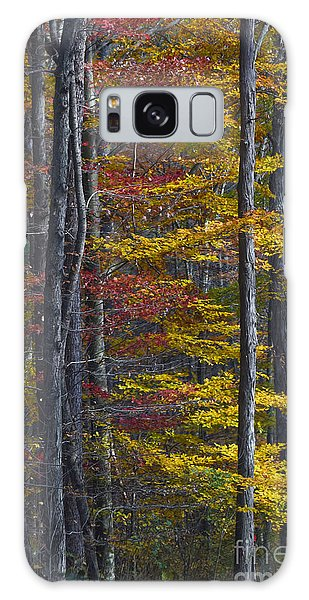 Trees With Autumn Colors 8260c Galaxy Case