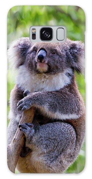 Koala Galaxy Case - Treetop Koala by Mike  Dawson