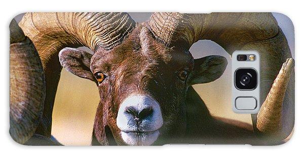 Trophy Bighorn Ram Galaxy Case