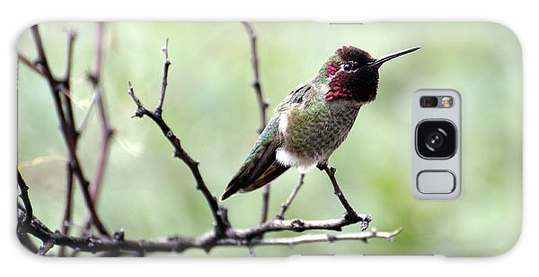 Trumpeting Hummingbird Galaxy Case