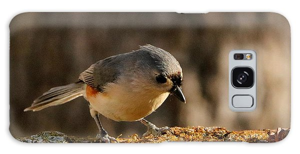 Tufted Titmouse In Fall Galaxy Case