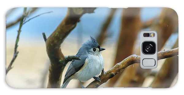 Tufted Titmouse In Tree Galaxy Case