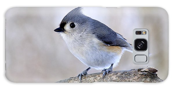 Tufted Titmouse On Dogwood 2 Galaxy Case