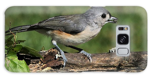 Tufted Titmouse On Tree Branch Galaxy Case