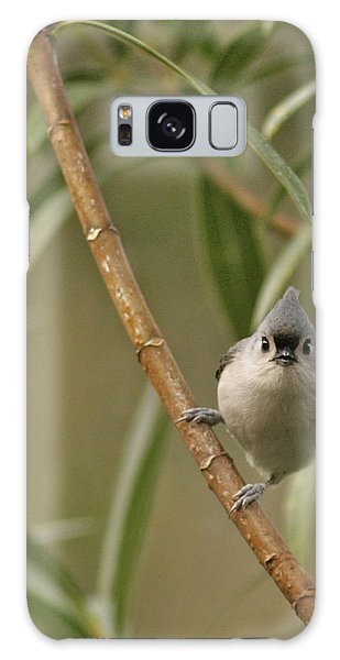 Titmouse Galaxy Case - Tufted Titmouse by Phill Doherty