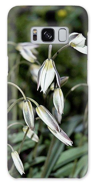 Tulipa Turkestanica Galaxy Case
