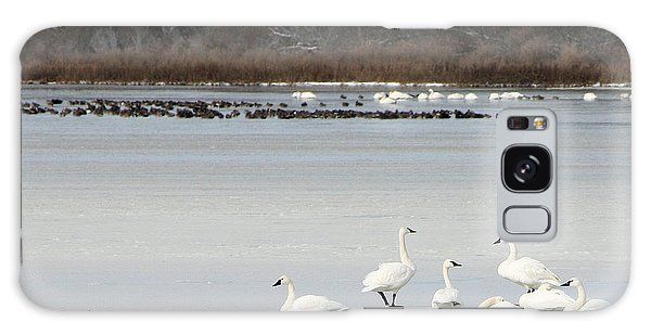 Tundra Swans 1 Galaxy Case
