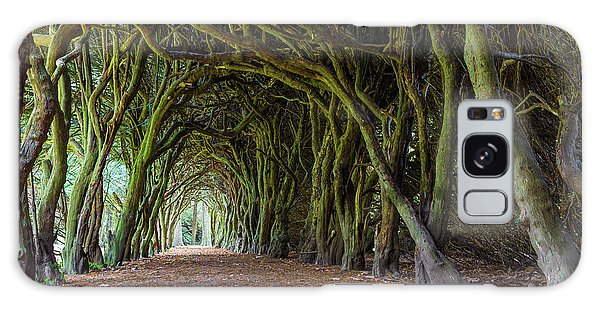 Tunnel Of Intertwined Yew Trees Galaxy Case by Semmick Photo