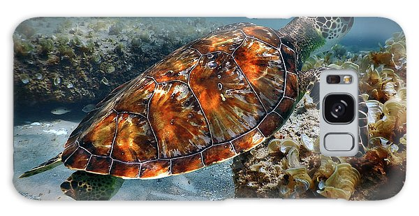 Turtle And Shark Swimming At Ocean Reef Park On Singer Island Florida Galaxy Case by Justin Kelefas