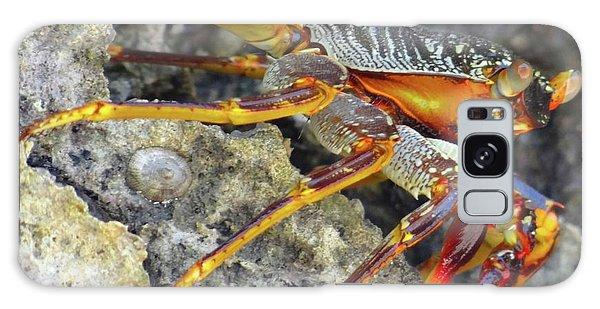 Turtle Bay Resort Watamu Kenya Rock Crab Galaxy Case