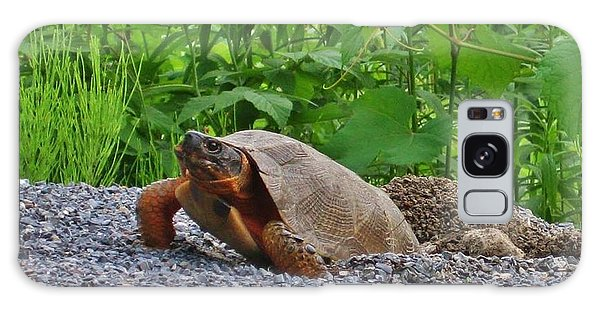 Wellsboro Galaxy Case - Turtle Nest by Raquel Rogers