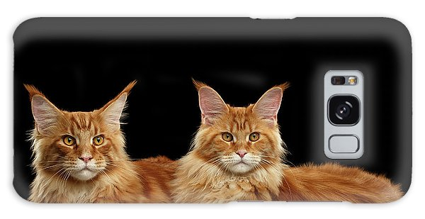 Two Ginger Maine Coon Cat On Black Galaxy Case