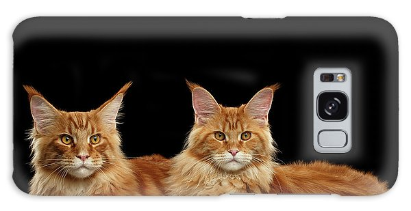 Cat Galaxy Case - Two Ginger Maine Coon Cat On Black by Sergey Taran