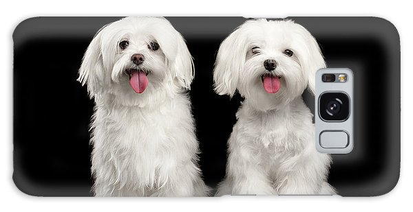 Two Happy White Maltese Dogs Sitting, Looking In Camera Isolated Galaxy Case