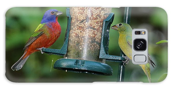 Two Painted Buntings Galaxy Case