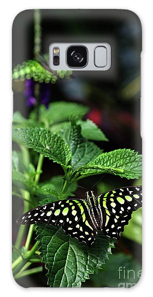 Two Tailed Jay Butterflies- Graphium Agamemnon Galaxy Case