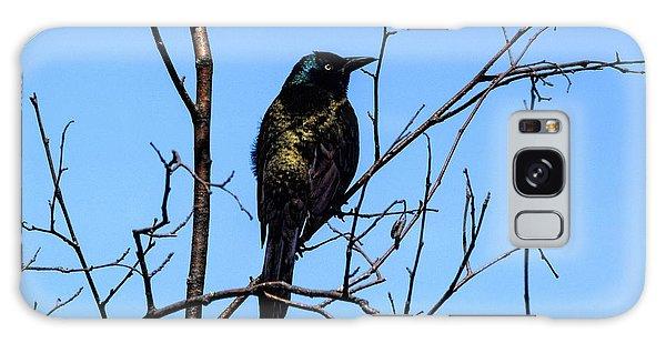 Aroostook County Galaxy Case - Uncommon Grackle by William Tasker