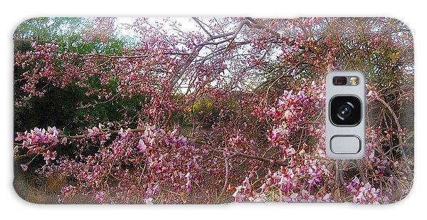 Vekol Wash Desert Ironwood In Bloom Galaxy Case