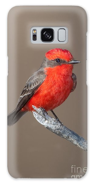 Vermilion Flycatcher Galaxy Case by Clarence Holmes