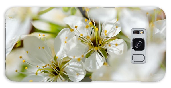 Vermont Apple Blossoms Galaxy Case