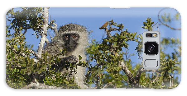 Vervet Monkey Perched In A Treetop Galaxy Case