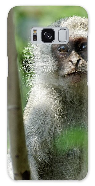 Vervet Monkey Galaxy Case by Robert Shard