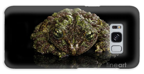 Vietnamese Mossy Frog, Theloderma Corticale Or Tonkin Bug-eyed Frog, Isolated On Black Background Galaxy Case
