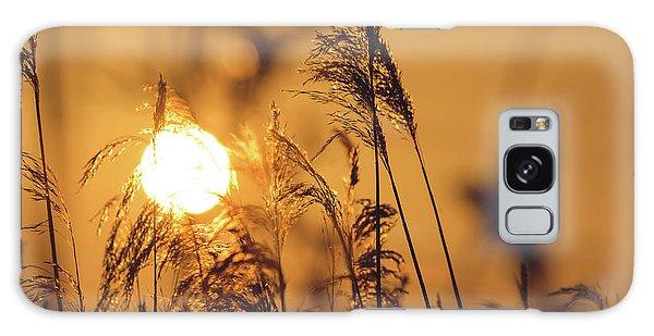 View Of Sun Setting Behind Long Grass C Galaxy Case