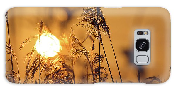 View Of Sun Setting Behind Long Grass C Galaxy Case