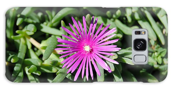 Ice Plant Galaxy Case
