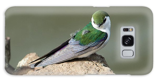 Violet-green Swallow Galaxy Case