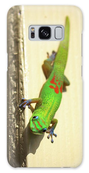 Waimea Gecko Galaxy Case