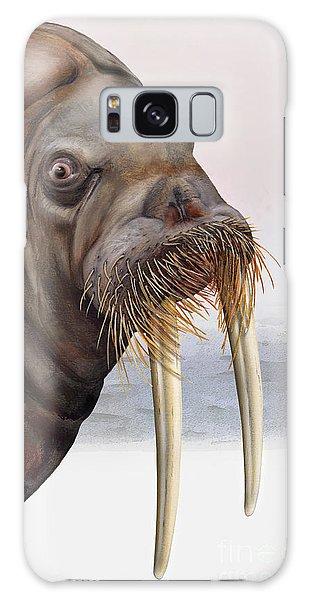 Walrus Odobenus Rosmarus - Marine Mammal - Walross Galaxy Case by Urft Valley Art