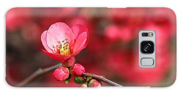 Warmth Of Flowering Quince Galaxy Case