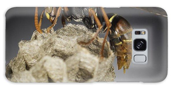 Wasp On A Nest Galaxy Case