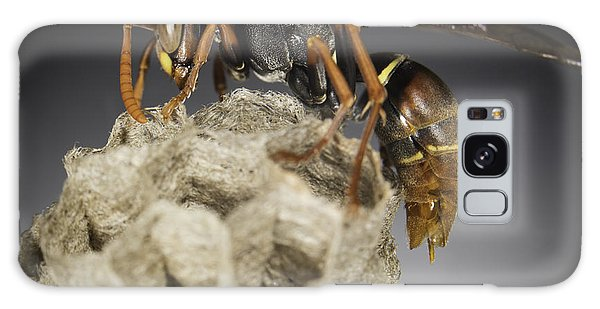 Wasp On A Nest Galaxy Case