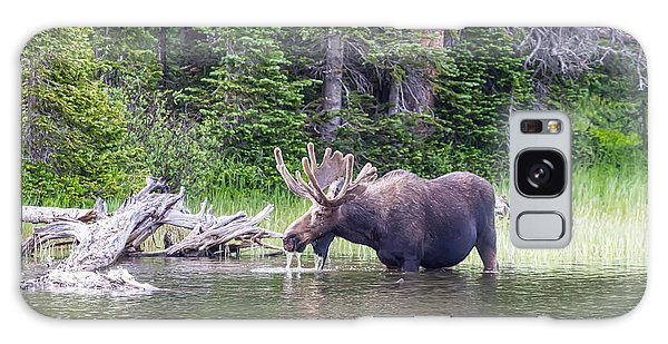 Indian Peaks Wilderness Galaxy Case - Water Feeding Moose by James BO Insogna
