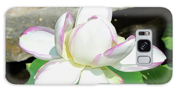 Water Lotus Galaxy Case by Inspirational Photo Creations Audrey Woods