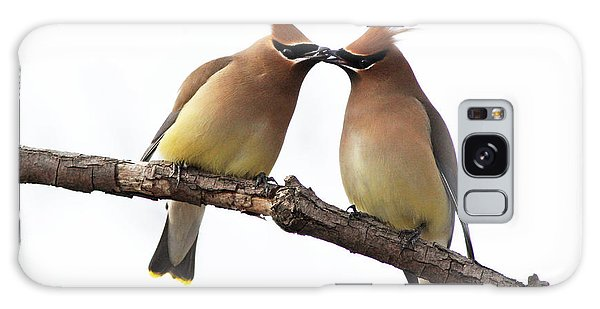 Waxwings In Love Galaxy Case