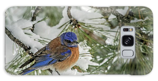 Western Bluebird In A Snowy Pine Galaxy Case