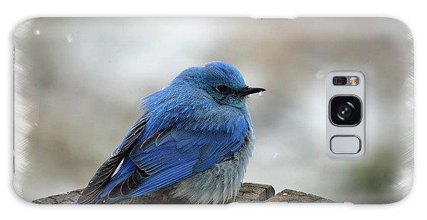 Western Bluebird On Cold Day Galaxy Case