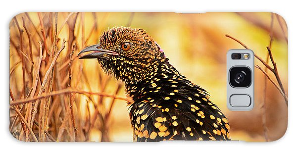 Western Bowerbird Galaxy Case by Racheal  Christian
