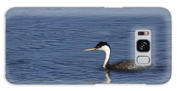 Western Grebe In Late Afternoon Light Galaxy Case