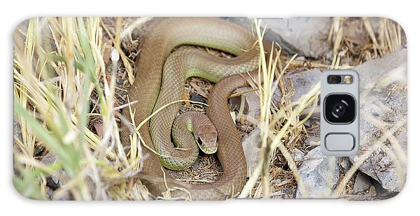 Western Yellow-bellied Racer, Coluber Constrictor Galaxy Case