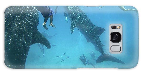 Whale Sharks Galaxy Case