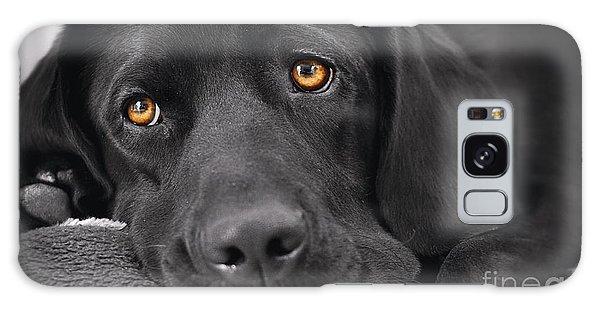 When Dogs Die Galaxy Case
