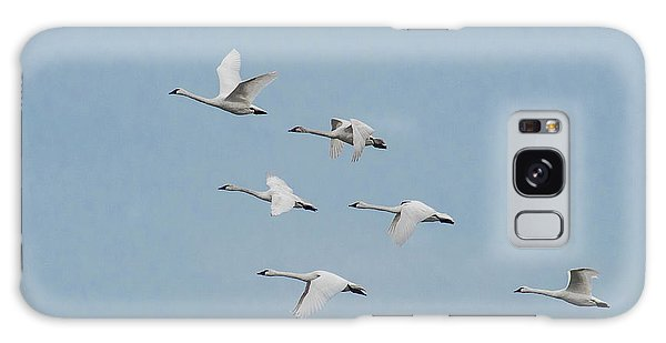 Galaxy Case featuring the photograph Whistling Swan In Flight by Donald Brown