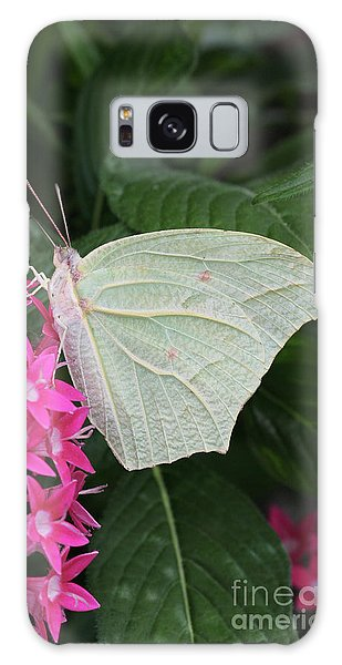 White Angled Sulphur #3 Galaxy Case